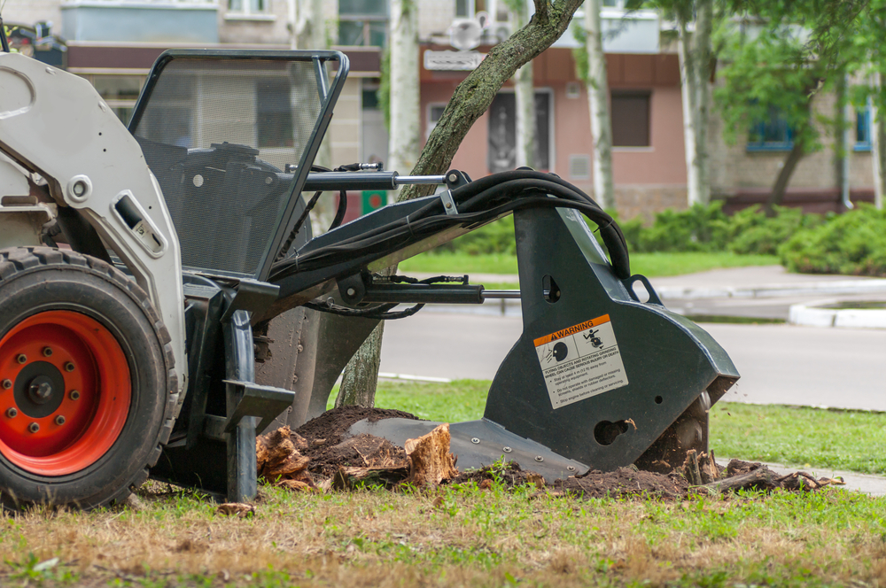 Stump Grinding & Stump Removal