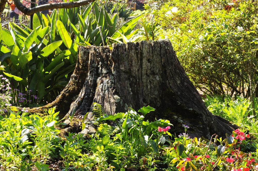 Stump Removal Pasadena