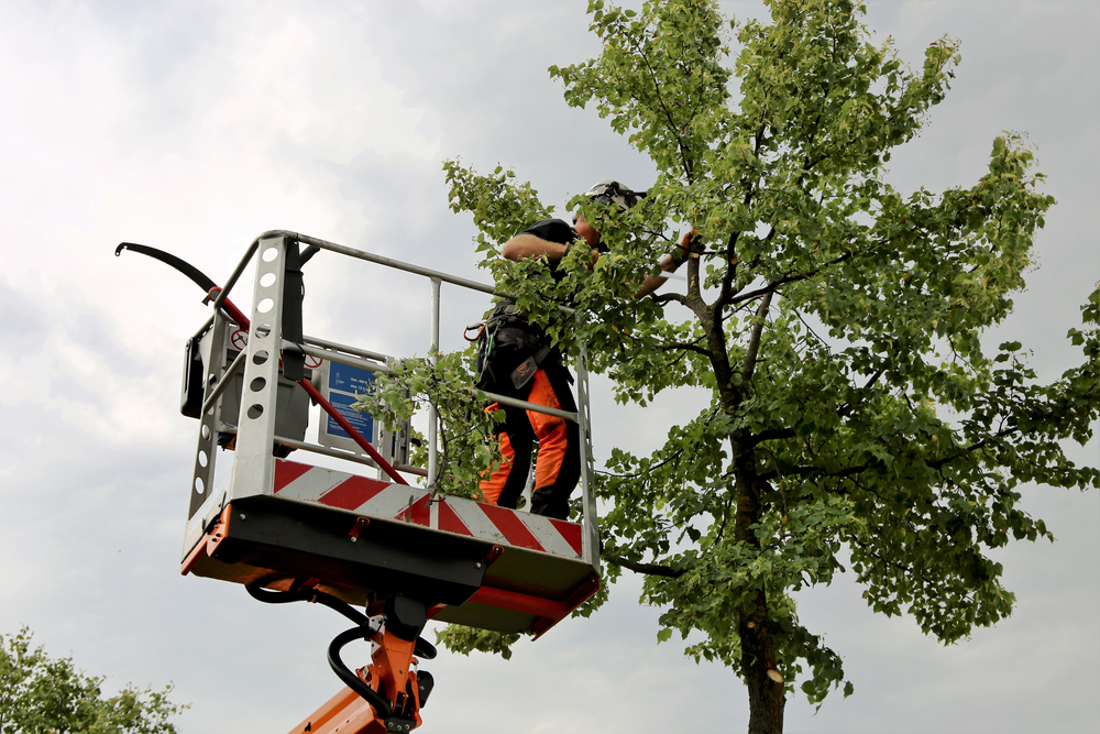 Tree Care Pasadena, TX