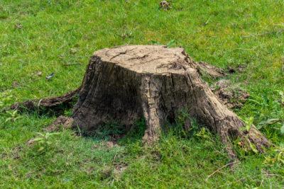 Pasadena Stump Removal