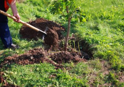 Tree Planting Pasadena TX